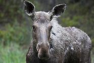 Kootenay National Park Photos
