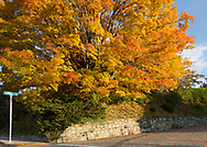 Fall Color in Blowing Rock NC