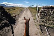 A horse rides through a fence high in the Andes mountains with Sincholagua volcano off in the distance.