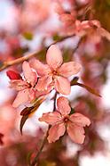 20070507 Spring
