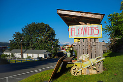 North America, United States, Washington, Whidbey Island, Langley, flower stand by road