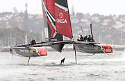 A seal gets a bit of a fright as Emiratres Team New Zealand foils overhead while testing in their surrogate America's Cup  catamaran on the Waitamata Harbour. 29/11/2016