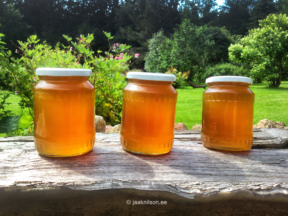 Three glass jars of honey with picnic wiker basket on wooden bench under tree. Rural natural scene. Healthy sweet food and eating.