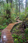Combers Beach Trail, Pacific Rim National Park, Tofino, Vancouver Island, British Columbia, Canada