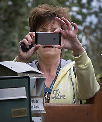 © Licensed to London News Pictures. 06/10/2016. Dorking, UK.  Diane James takes a phone photo of waiting media from behind her gate after returning home. Diane James resigned as UKIP party leader yesterday after 18 days in the post. Former leader Nigel Farage has returned as interim leader. Photo credit: Peter Macdiarmid/LNP