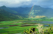 Hanalei Valley taro fields and rainbow; Hanalei National Wildlife Refuge, Kauai, Hawaii.