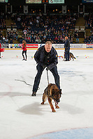 KELOWNA, CANADA - FEBRUARY 22: The RCMP canine patrol exhibits on the ice on February 22, 2017 at Prospera Place in Kelowna, British Columbia, Canada.  (Photo by Marissa Baecker/Shoot the Breeze)  *** Local Caption ***