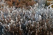 Winter in Nederland / Winter in Holland Paardenbos  achter Paleis Soestdijk