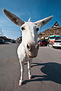 The mules run wild in Oatman, Arizona. Missoula Photographer