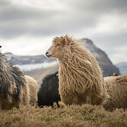 Viðareiði, Viðoy