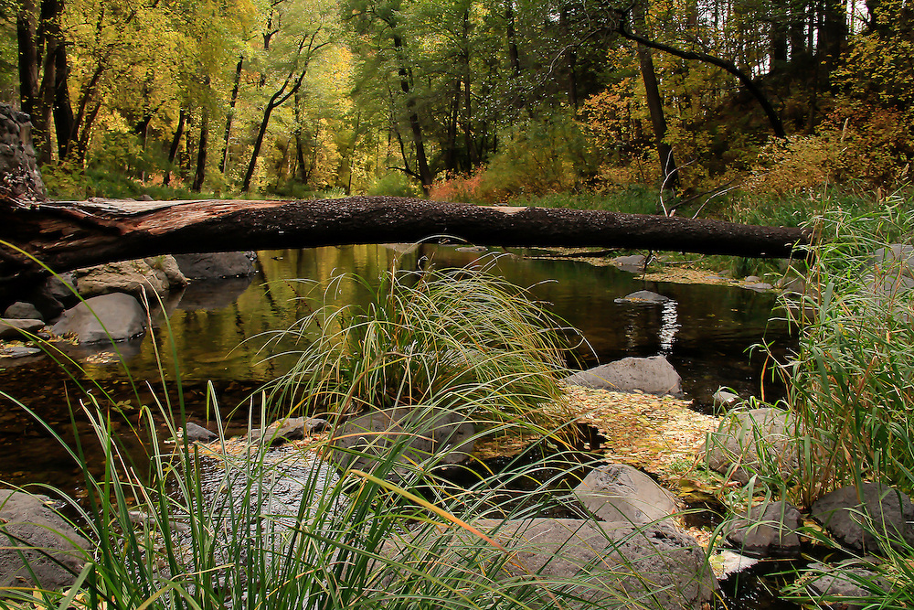 Natural Log bridge to cross over Oak Creek