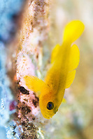 The Lembeh Strait in N Sulawesi is famous for its unusually high marine biodiversity, particularly of unusual animals that live on the exposed sand areas.
