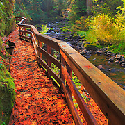 Sweet Creek Trail Scaffold Bridge - Mapleton, Oregon