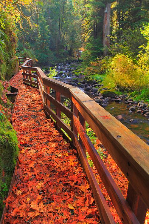 Sweet Creek Trail Scaffold Bridge - Mapleton, Oregon