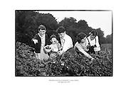 Blackberry picking at Sandyford, County Dublin.<br /> <br /> 19th September 1959<br /> 19/09/1959