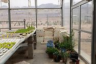 Plants growing inside the greenhouses o the The Sahara Forest Project on the outskirts of Aqaba, on Jordan's southern Red Sea coastline. The farm uses desalinated sea water and greenhouses to sustainably farm crops in land that was once aris desert.