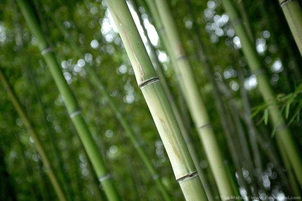 Bamboo gardens of Slender West Lake in Yangzhou, China, once a regional trading hub and now a suburb city of Shanghai and major producer of photovoltaic cells for solar power.