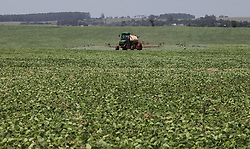 November 17, 2018 - Campo MourãO, Brazil - CAMPO MOURÃO, PR - 17.11.2018: FERRUGEM ASIÁTICA PREOCUPA AGRICULTORES - Concerned about the emergence of Asian Rust cases in soybean plantations in the Campo Mourão Region, Central West of Paraná, farmers began to be prevented by applying fungicides to the plantations. In the photo, rural producer applies fungicide against attack of the rust. (Credit Image: © Dirceu Portugal/Fotoarena via ZUMA Press)
