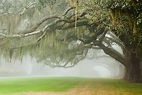 The Avenue of Oaks, Retreat Plantation, St. Simons Island, Georgia