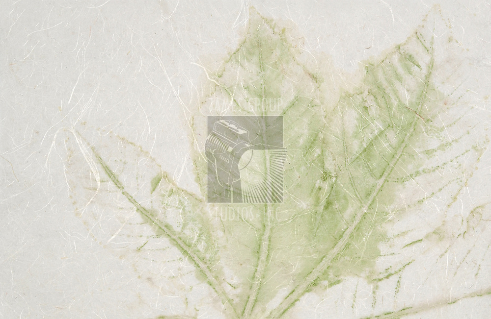 natural paper with a green leaf stain on it