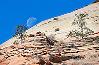 A three quarter moon sets across a sandstone outcrop in Zion National Park, Utah.