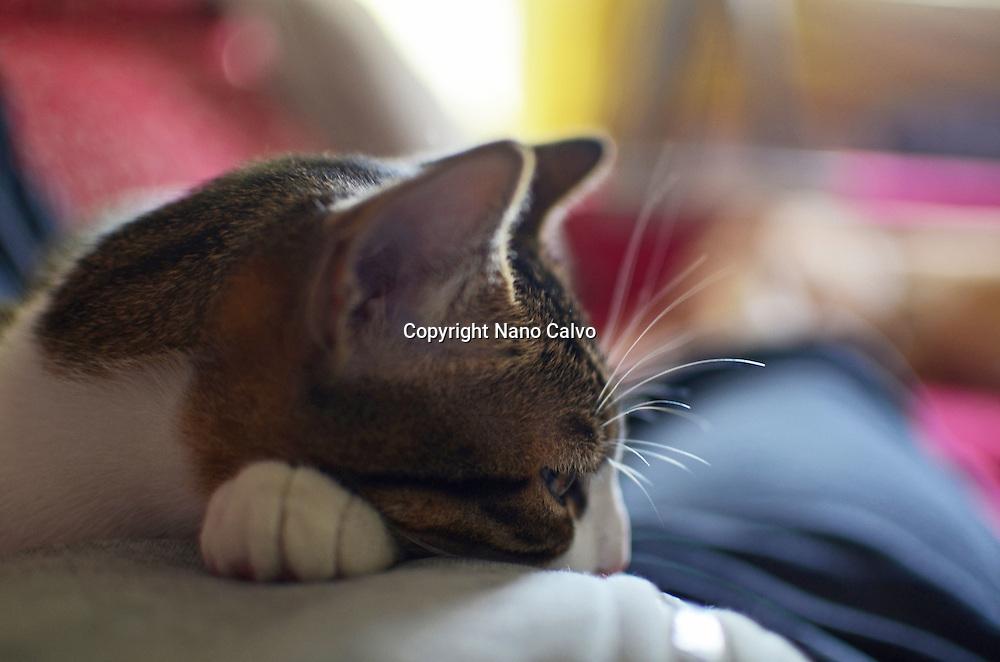 Cute kitten resting on owners body