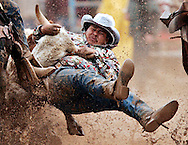 Bulldogging at the Parada del Sol Rodeo in Scottsdale, Arizona.