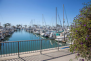 Boats Docked at the Dana Point Harbor