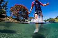 Underwater split level view of a Boy (8yrs) splashing through shallows at Wenderholm Regional Park Estuary in summer. Pohutukawa tree in flower in background. Auckland. New Zealand