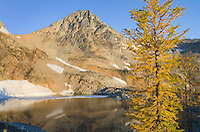 Subalpine Larch (Larix lyallii) and Black Peak, North Cascades Washington