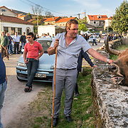 """Rancher caresses his bull before a """"chega"""" in the village of Viade de Baixo. """"Chegas"""" are duels between bulls popular in the Barroso region during the summer months"""