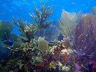 Scuba Diving, Key Largo, FL