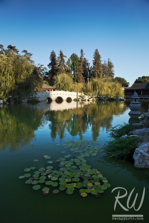 Lily Pads in Foreground Classical Chinese Garden Pond at The Huntington Botanical Gardens, San Marino, California