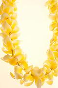 Plumeria lei, Hawaii<br />