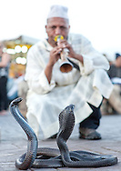 Snake charmer and cobras in Jemaa El Fna Square in Marrakech, Morocco.