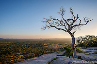 A dead Oak Tree above the valley at Enchanted Rock State Park.<br /> <br /> Available Size: 7x11, 13x19, 16x24