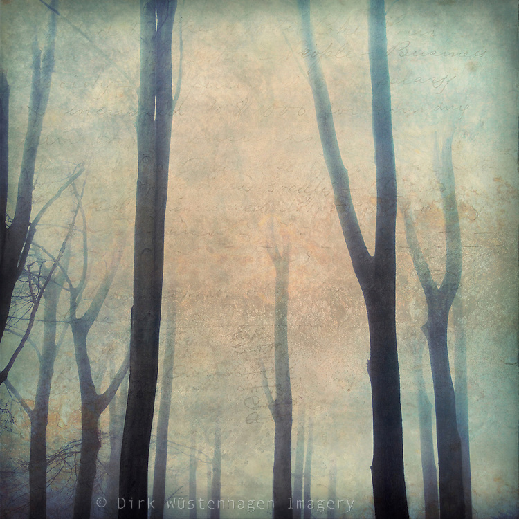 abstraction of a foggy forest in autumn