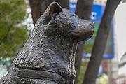 Bronze statue of Akita dog Hachiko at Shibuya station Tokyo , Japan