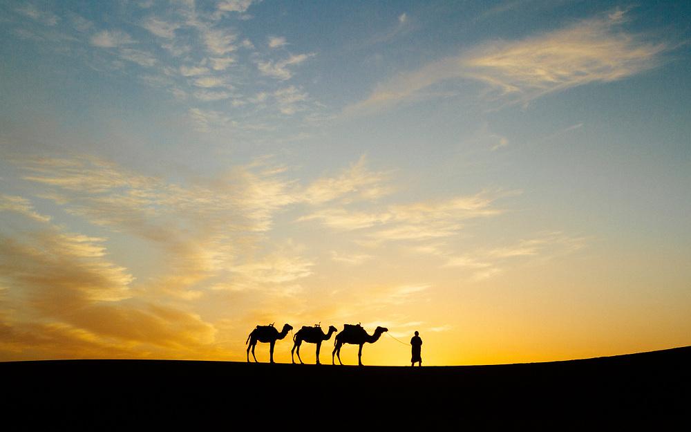 M'HAMID EL GHIZLANE, MOROCCO - 27th April 2014 - Nomadic shepherd and camel train stand silhouetted against a vivid Saharan sunset, beyond M'Hamid el Ghizlane, Erg Chigaga region of the Sahara desert, Southern Morocco