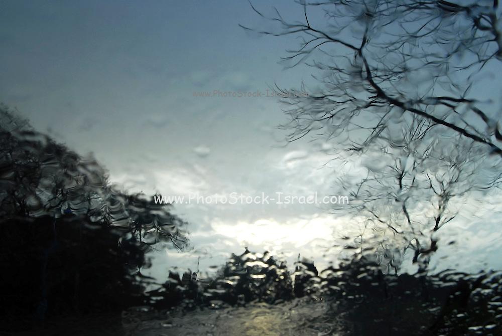 garden seen through rain drops on a window