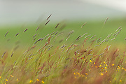 Roadside verges are an important habitat for a huge variety of grasses and flowers.