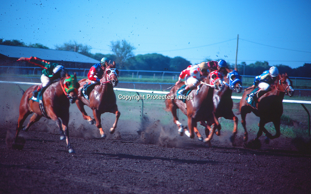 """Quarter Horses race to the finish line. NOTE: Click """"Shopping Cart"""" icon for available sizes and prices. If a """"Purchase this image"""" screen opens, click arrow on it. Doing so does not constitute making a purchase. To purchase, additional steps are required."""