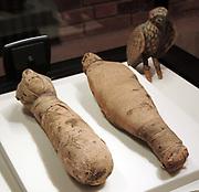 Egyptian, mummified cats circa 7th century BC