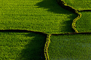 Pattern of rice fields near Antsirabe, Madagascar