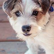 Dog Candids