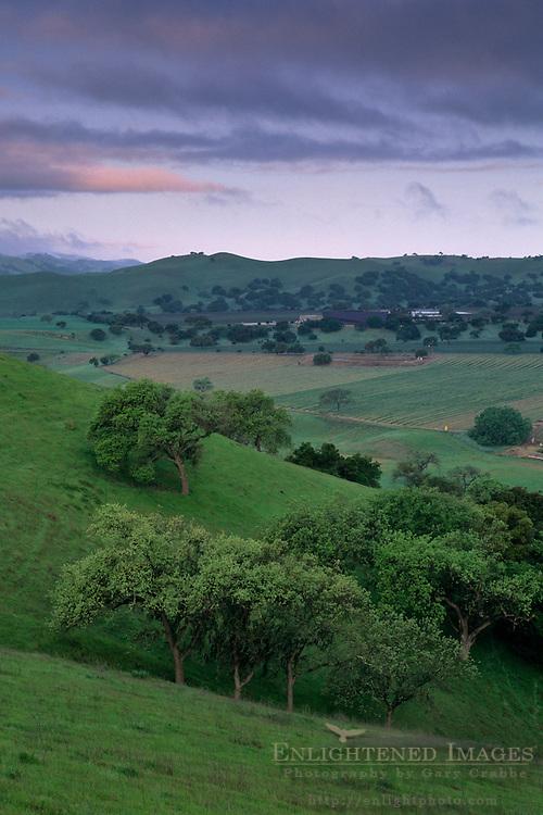 Green hills in spring along Foxen Canyon Road, Santa Barbara County, California