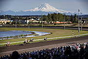 Mt. Rainier is out in all its glory as the crowd cheers the end of the 5th race at Emerald Downs, the opening day of racing for the 2015 season. (Dean Rutz / The Seattle Times)