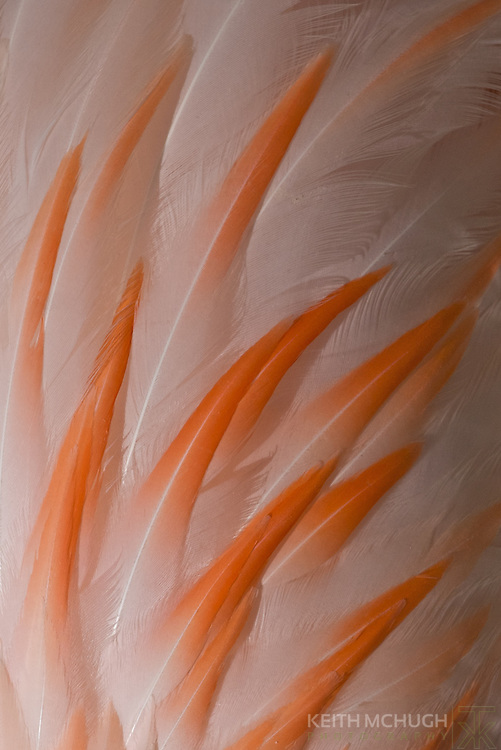 Abstract view of a flamingo's wing feathers