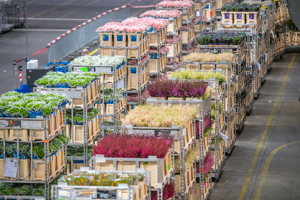 A cart full of various flowers at the worlds largest flower auction, Royal Flora Holland. Amsterdam, Netherlands