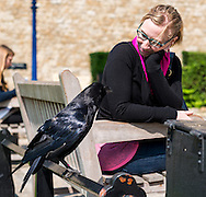 One of the many ravens that are kept on the grounds of the Tower of London greets Jess.